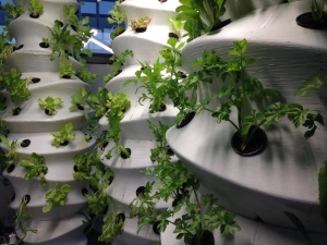 wasp vertical farm
